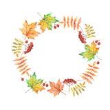 Vector el marco del círculo de la acuarela con las hojas y las bayas de otoño Foto de archivo libre de regalías