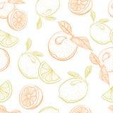 Vector el modelo del dibujo de la naranja y del limón de la fruta cítrica Imagen de archivo libre de regalías
