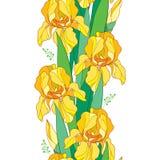 Vector el modelo inconsútil con la flor del iris amarillo del esquema, el brote y la hoja verde en el fondo blanco Fondo floral c Imágenes de archivo libres de regalías