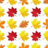 Vector el modelo inconsútil con las diversas hojas de otoño coloridas en un fondo blanco Fotografía de archivo