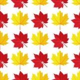Vector el modelo inconsútil con las diversas hojas de otoño coloridas en un fondo blanco Foto de archivo libre de regalías