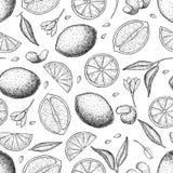 Vector el modelo inconsútil dibujado mano de la cal y del limón libre illustration