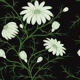Vector el modelo inconsútil floral Foto de archivo libre de regalías
