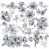 Vector el paquete de las altas flores detalladas grabadas para el diseño Imagen de archivo libre de regalías