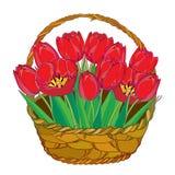 Vector el ramo con las flores de los tulipanes del esquema y las hojas rojas del verde en la cesta aislada en blanco Elementos ad Imagen de archivo
