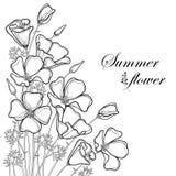 Vector el ramo de la esquina de flor de la amapola de California del esquema o luz del sol de California o Eschscholzia, hoja y b libre illustration