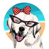 Vector el retrato de las gafas de sol que llevan del perro del labrador retriever, arco retro Ejemplo de la moda del verano Vacac Imagen de archivo libre de regalías