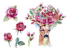 Vector el sistema floral dibujado mano de la acuarela con los ciervos Fotografía de archivo