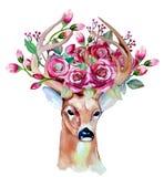 Vector el sistema floral dibujado mano de la acuarela con los ciervos Foto de archivo