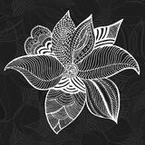 Vector elegant floral elements hand drawing Stock Photography