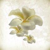 Vector elegant grunge flower background Stock Images