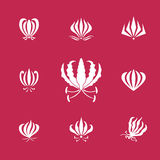Vector elements silhouettes of gloriosa or flame lily flower Stock Images