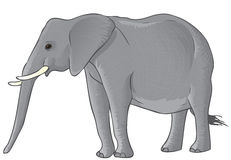 Vector elephant Stock Photography
