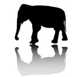 Vector elephant silhouette Stock Photo