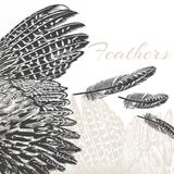 Vector engraved feathers fashion background Stock Images