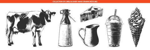 Vector engraved style illustrations of milk products and dairy, cheese, ice cream, milkshake, cow. Hand drawn sketches in