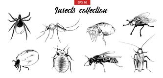 Vector engraved style illustrations for posters, logo, emblem and badge. Hand drawn sketch set of insects, fly, sucker, mosquito vector illustration