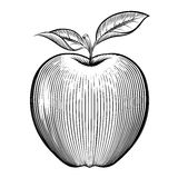 Vector engraving apple Stock Images