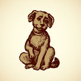 Vector engraving. Little puppy Royalty Free Stock Image