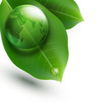 Vector environmental element. With transparent green ball-globe and leaves on a white background Royalty Free Stock Image