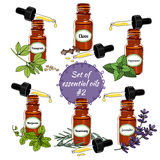 Vector essential oils set 6. Vector set of essential oils. Hand-drawn Essential Oils and Natural Supplements. Clove, Marjoram, Lavender, Fenugreek, Rosemary Royalty Free Stock Images