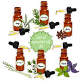 Vector essential oils set 6. Vector set of essential oils. Hand-drawn Essential Oils and Natural Supplements. Lemongrass, Thyme, Sage, Basil, Anise, Tarragon Royalty Free Stock Photos