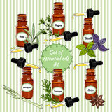 Vector essential oils set 5. Vector set of essential oils. Herbs collection essential oils. Hand-drawn Essential Oils and Natural Supplements. Lemongrass, Thyme Royalty Free Stock Images