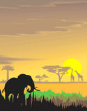 Vector evening landscape illustration. With wild animals Stock Images