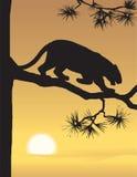 Vector evening landscape illustration Royalty Free Stock Photo