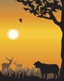 Vector evening landscape illustration Royalty Free Stock Photos