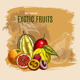 Vector exotic durian, mango, papaya fruits poster Stock Photography