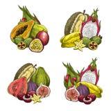 Vector exotic fresh tropical fruits Royalty Free Stock Photos