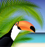 Vector Exotic trip card  with palm tree and Toucan Stock Photography