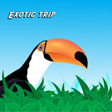 Vector Exotic trip card Royalty Free Stock Photography