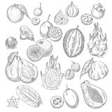 Vector exotic or tropical fruits sketch icons set Stock Image