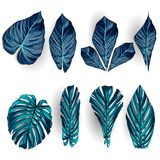 Vector exotic tropical leaves, jungle foliage set isolated on white background. Flat colorful style. Vector exotic tropical leaves, jungle foliage set isolated stock illustration