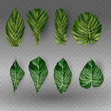 Vector exotische tropische die bladeren, de reeks van het wildernisgebladerte op witte achtergrond wordt geïsoleerd Vlakke kleurr royalty-vrije stock afbeelding