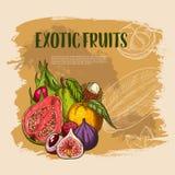 Vector exotische verse tropische vruchten affiche Royalty-vrije Stock Foto