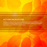 Vector Fall abstract floral background Royalty Free Stock Photo