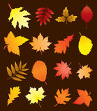 vector fall leaves Stock Image