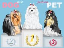 Vector fashion dog champion on the podium Royalty Free Stock Photography