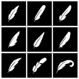 Vector feather on black background Royalty Free Stock Photos