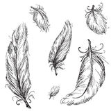 Vector feathers. Set of vector feathers, isolated stock illustration