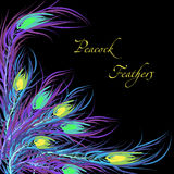 Vector feathers peacock. Black background Royalty Free Stock Photos