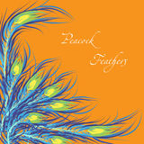 Vector feathers peacock. Orange background. Vector feathers peacock with orange background. Fashionable design eps10 Stock Photography