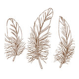 Vector feathers Royalty Free Stock Images