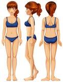 A Vector of Female Body. Illustration Stock Illustration