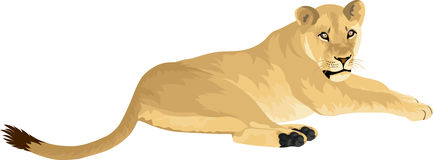 Vector Female lion Lioness Stock Photo