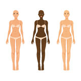Vector female models Royalty Free Stock Photography