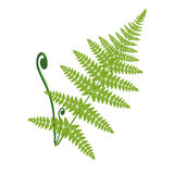 Vector fern leaf  on the white Royalty Free Stock Images
